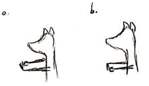 croquis_etirements_1a-b_avant-bras